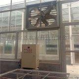 蔬菜种植玻璃温室大棚