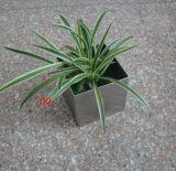 不鏽鋼正方形桌面式花盆 不鏽鋼盆栽小花盆擺件定做