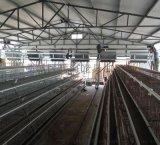 出售养母鸡的热镀锌笼子,层叠式占地少不损坏鸡蛋