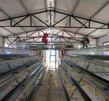哪有生产外贸出口的蛋鸡笼电镀锌蛋鸡笼