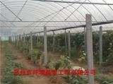 專業建造溫室大棚,骨架拱棚、日光溫室'鄭州市祥瑞溫室工程'