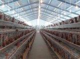 养鸡场和鸡舍用的热镀锌高质量蛋鸡笼