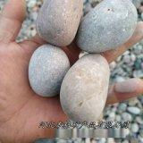 本格廠家供應天然鵝卵石 裝飾造景公園鋪路鵝卵石