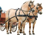 英皇馬挽具,馬套