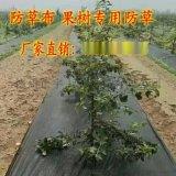 编织布 蓝莓防草布 透水 透气 环保无毒