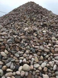 诚鑫纯厂家直销天然河鹅卵石  白色砾石鹅卵石