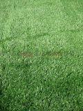 西安人造草坪哪里有卖草坪137,72120237