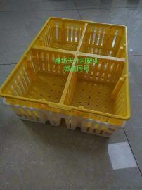 塑料鸡苗箱 四格鸡鸭苗运输箱 鸡苗周转箱