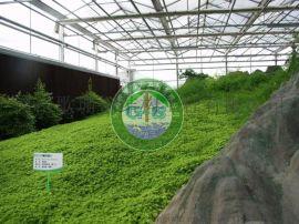 新疆温室/新疆大棚/新疆温室建造/新疆温室公司/新疆大棚设计/新疆歌珊温室大棚