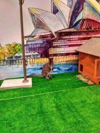 河南郑州哪里有动物表演出租萌宠羊驼展览互动