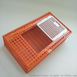 家禽周转箱厂家 鸡鸭鹅塑料笼 肉鸡塑料笼子