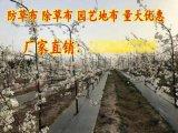 广西南宁盖草布一亩地多少钱?欢迎光临