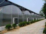 玻璃溫室大棚,智慧溫室大棚,連棟溫室大棚,山東千匯