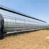日光溫室造價預算 蔬菜日光溫室大棚建設施工