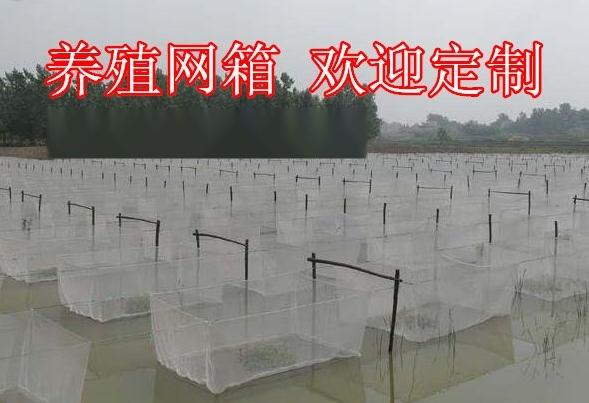 水蛭網箱廠家 水蛭養殖