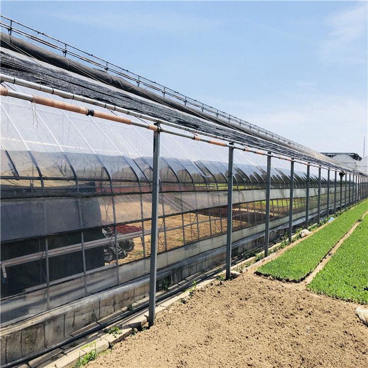 日光温室造价预算 蔬菜日光温室大棚建设施工846744032