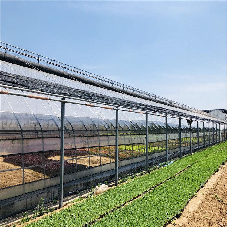日光温室造价预算 蔬菜日光温室大棚建设施工846744022
