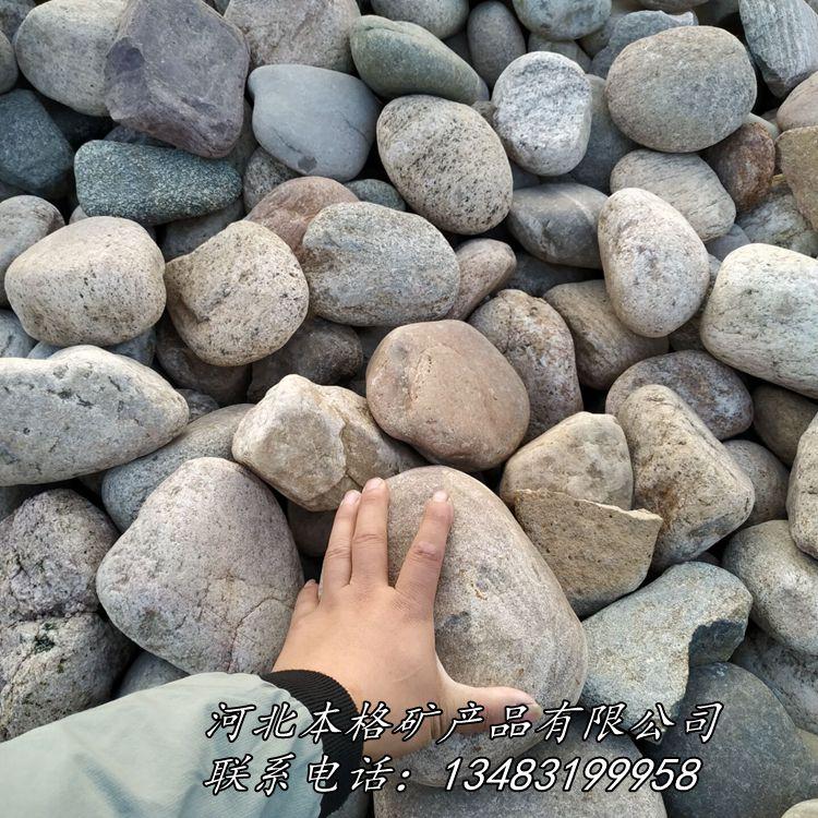 天然鹅卵石 河卵石 园林铺路鹅卵石 滤水垫层鹅卵石801742235