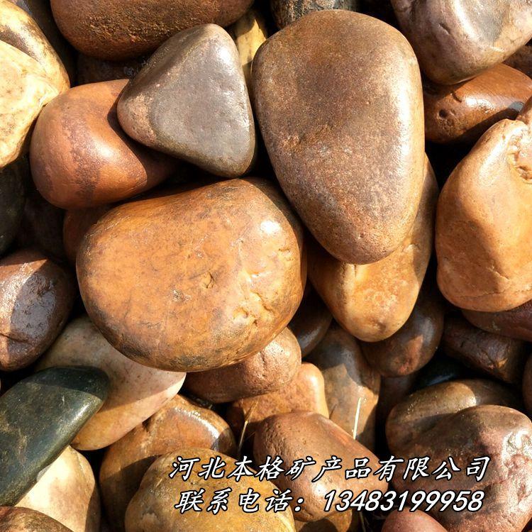 天然鹅卵石 河卵石 园林铺路鹅卵石 滤水垫层鹅卵石801742275
