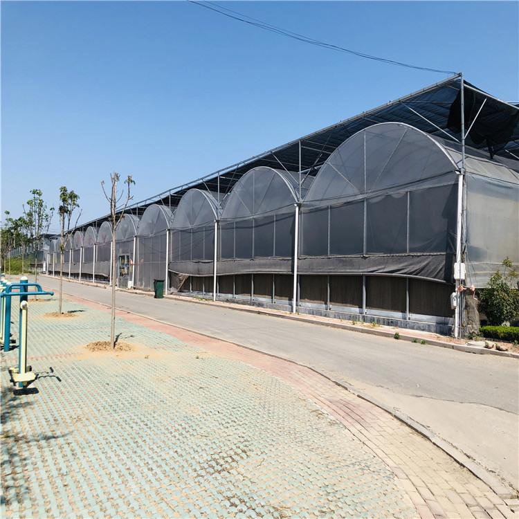 薄膜温室建设施工 连栋薄膜温室大棚造价预算846742992