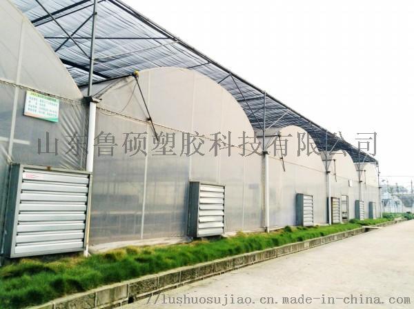 阳光板温室大棚 (2).jpg