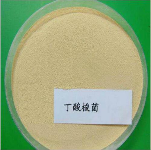 微生態菌劑丁酸梭菌 山東益昊生物丁酸梭菌820714272