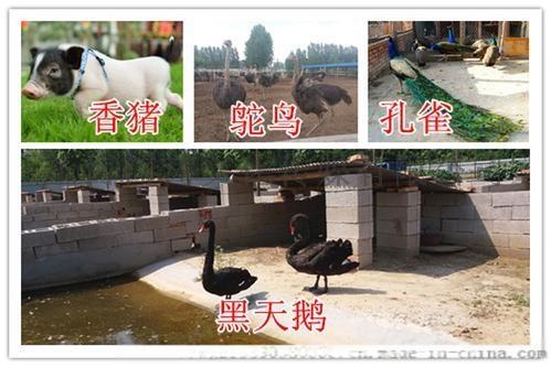 萌宠羊驼展示出租动物表演出租马戏团出租海狮表演出租837498785