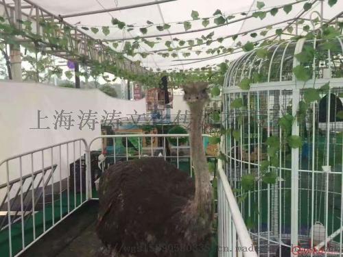 百鸟展出租方案 专业养殖百鸟园表演出租租赁公司103649925
