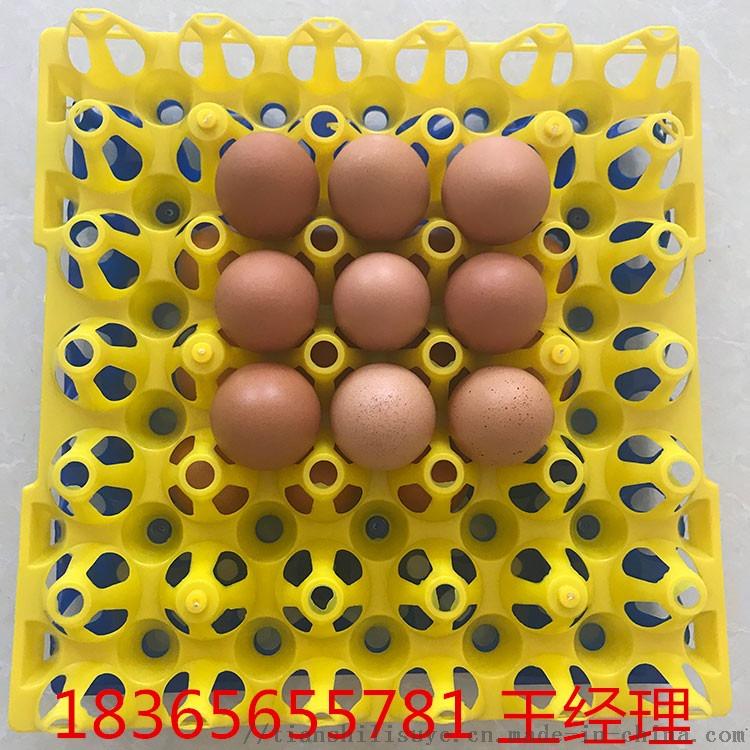 山东塑料鸡蛋托生产厂家 优质塑料鸡蛋托113064312