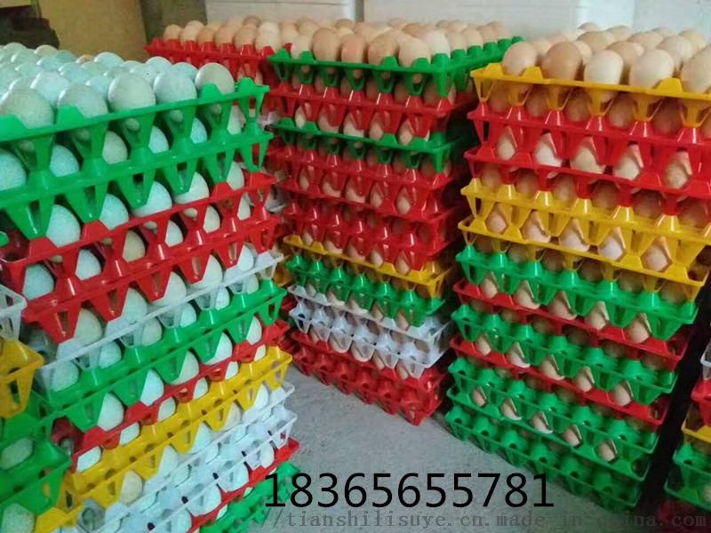 塑料蛋托 36枚鸡蛋托 塑料蛋托生产厂家134118335