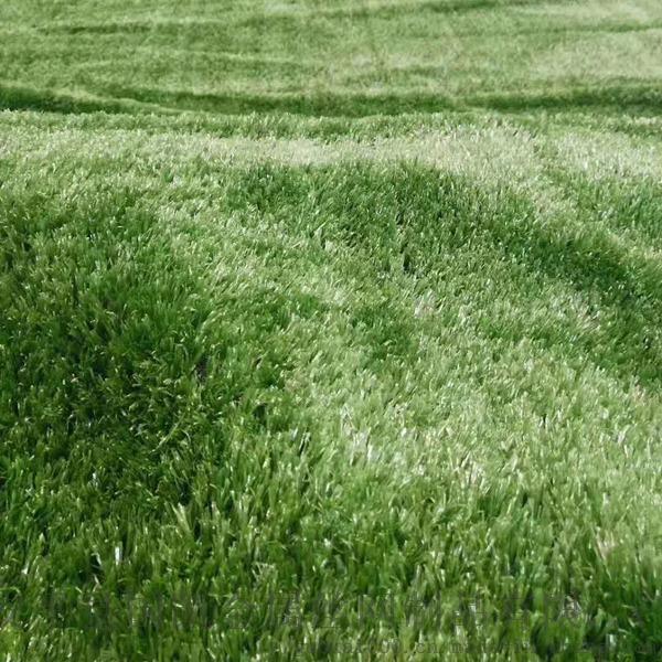 草坪 (2).jpg