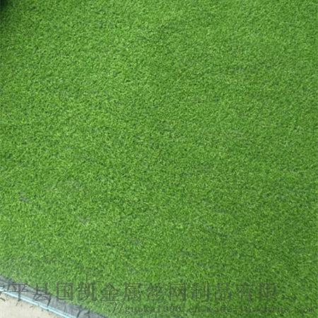 草坪 (1).jpg