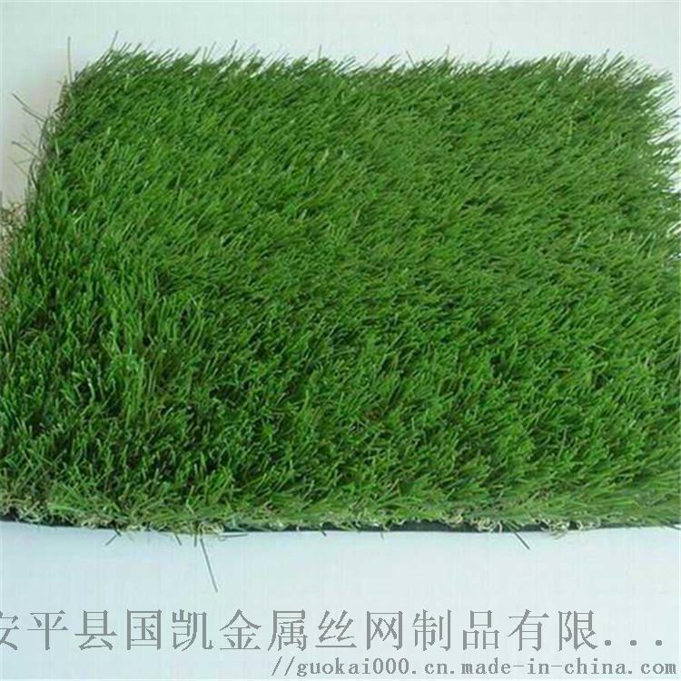 草坪 (3).jpg