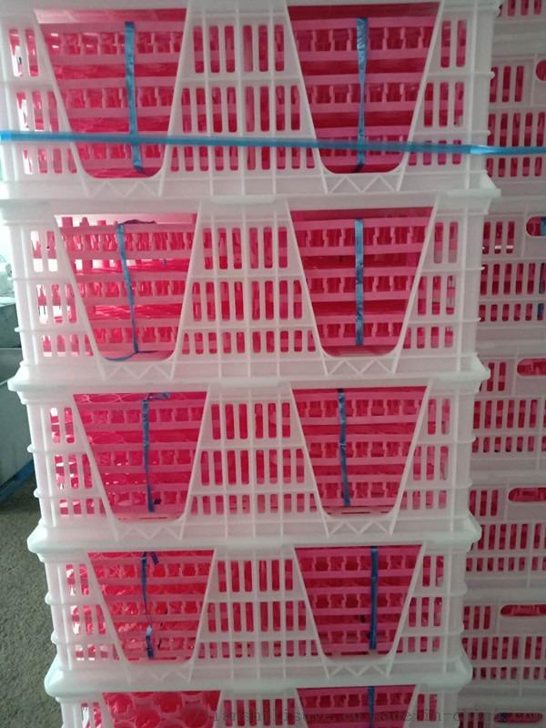 厂家供应塑料种蛋筐种蛋运输筐配蛋托用蛋筐129012232