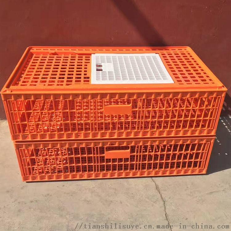 天仕利塑料成鸡运输笼塑料鸡笼子鸡鸭周转箱厂家860884012