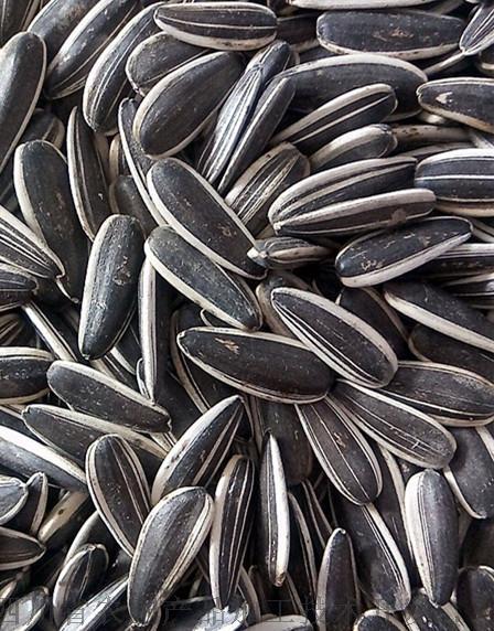 葵瓜子烘干机,葵花籽快速干燥机139375132