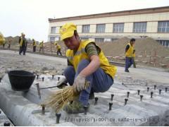 道釘錨固劑  鐵路軌枕螺栓錨固劑114605555