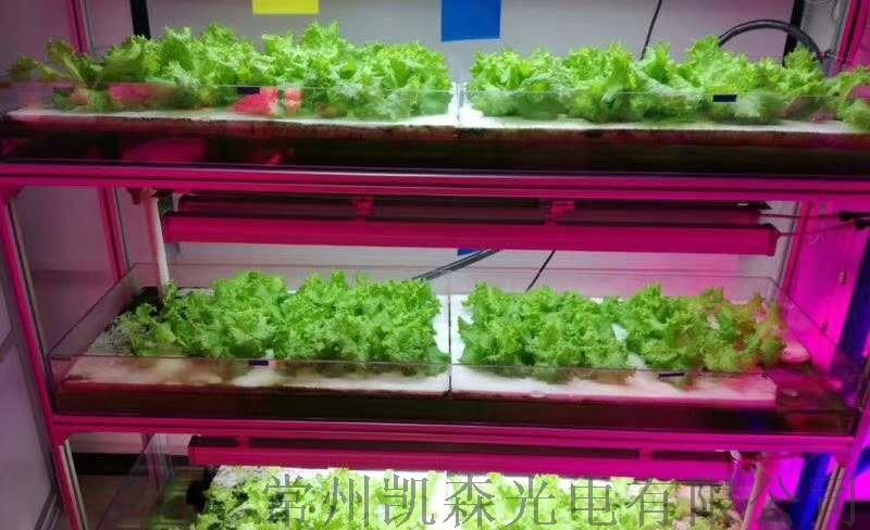 熱銷新款植物燈 led植物燈 室內植物生長燈113549375