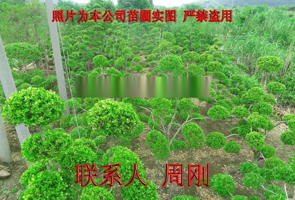 造型黄杨基地 1 - 481kb.jpg