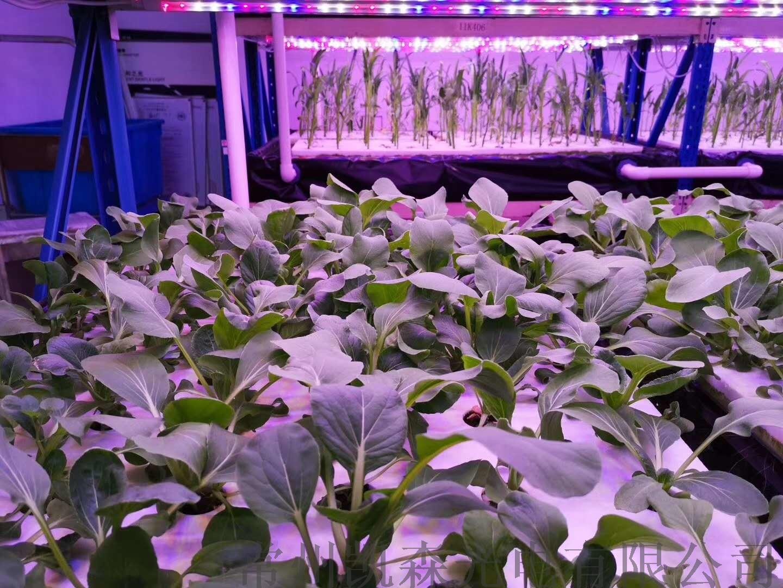 熱銷新款植物燈 led植物燈 室內植物生長燈113549165