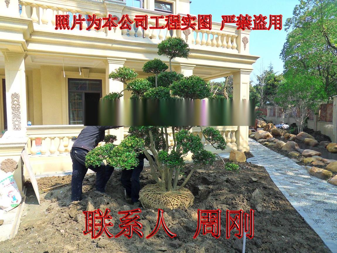 桃 庭院绿化 (31) - 441kb.jpg