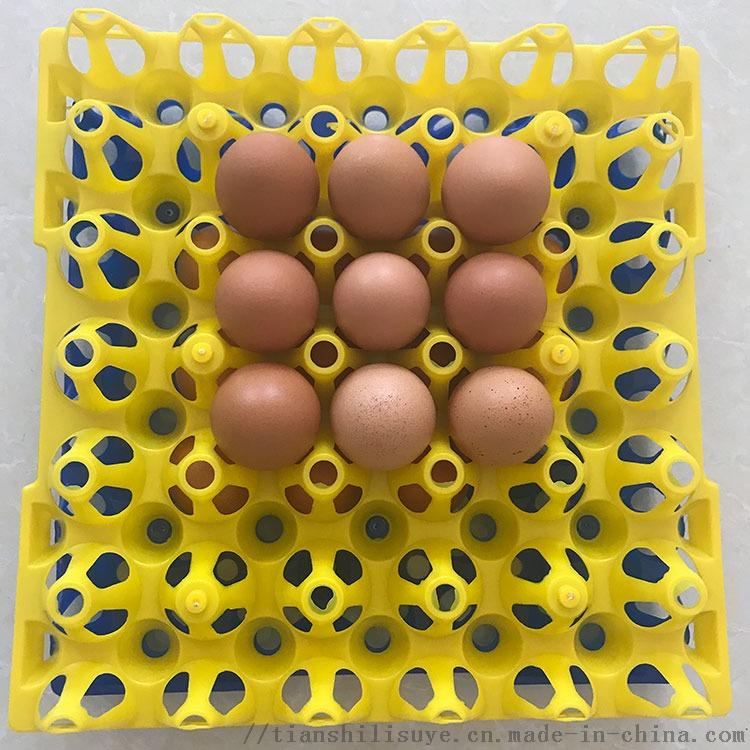 30枚塑料种蛋托 塑料种蛋托厂家 塑料蛋托852897022