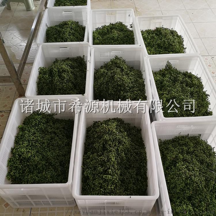 四川鲜花椒加工设备 保鲜花椒清洗杀青生产线106297802