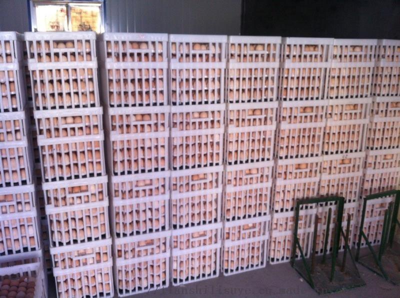 天仕利生产塑料种蛋筐种蛋运输筐优质蛋筐125588582