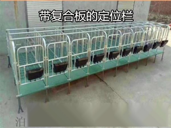 江苏优质母猪定位栏 复合板定位栏 带底母猪保胎栏57362605