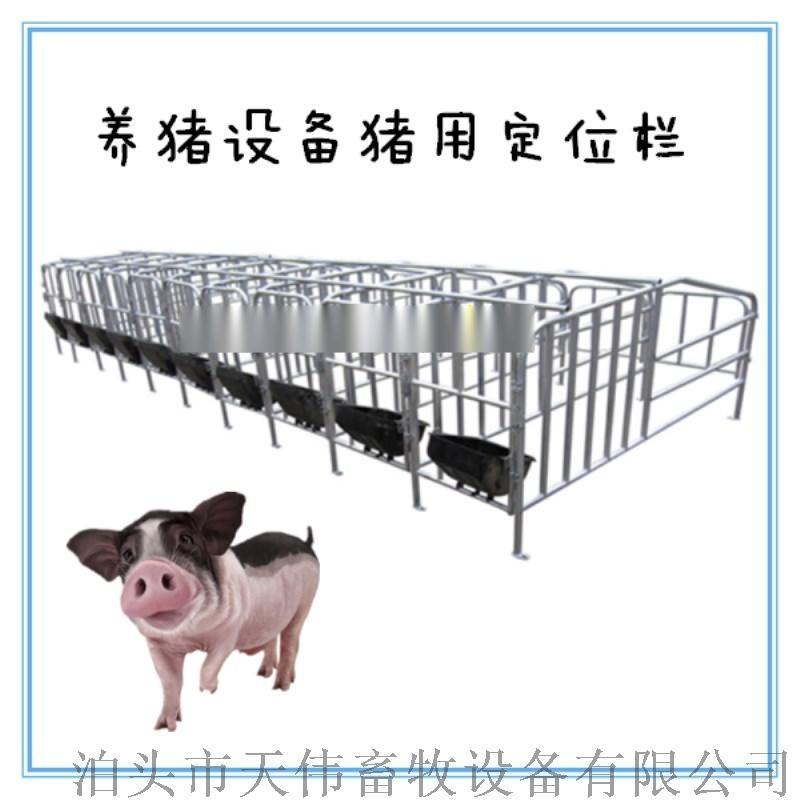 优质母猪保胎栏,单体限位栏,母猪定位栏766806235