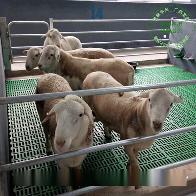 新型塑料羊用漏粪板 大型羊舍专用漏粪板837618732