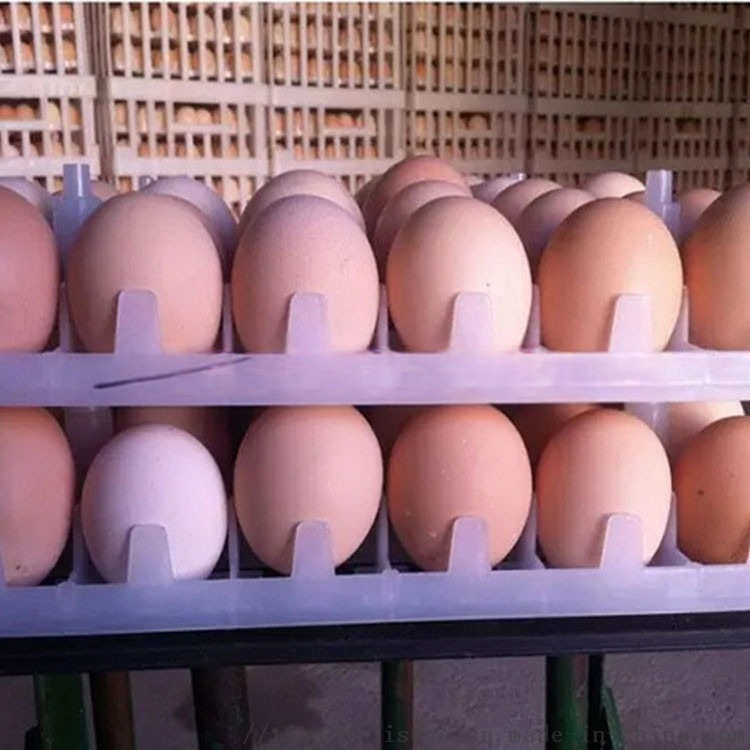 山东塑料鸡蛋托生产厂家 优质塑料鸡蛋托113064362