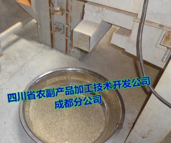 苦蕎米生產線,全胚苦蕎茶生產線,生產高品質苦蕎米21446832