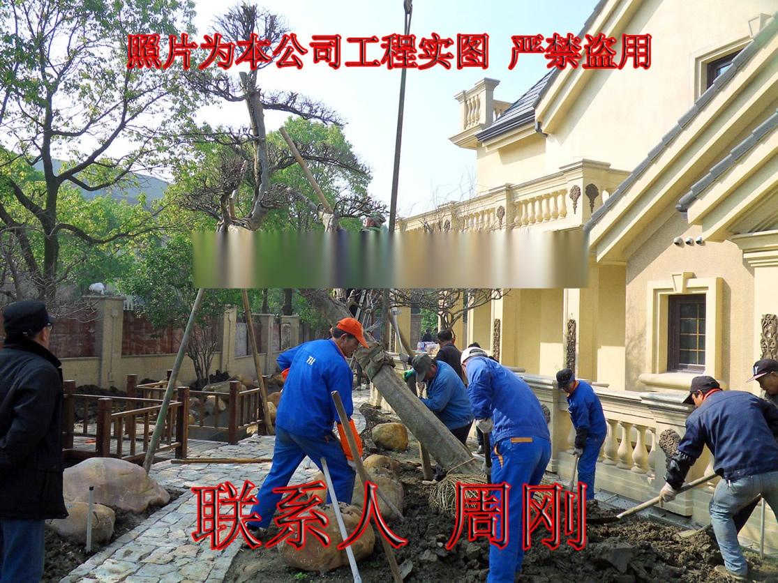苏州别墅绿化工程 庭院苗木种植基地 园林绿化设计882544485